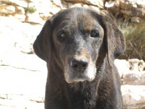 Labrador im Sandkasten, Luna hat sich gewälzt,  flipper-privat.de