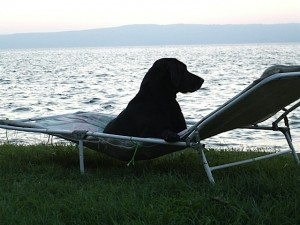 Hund Luna im Liegestuhl, Labrador am See, flipper-privat.de