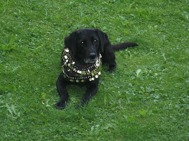 Hund mit Halskette verkleidet, Miss Lomax mit Bauchtanzgürtel, flipper-privat.de