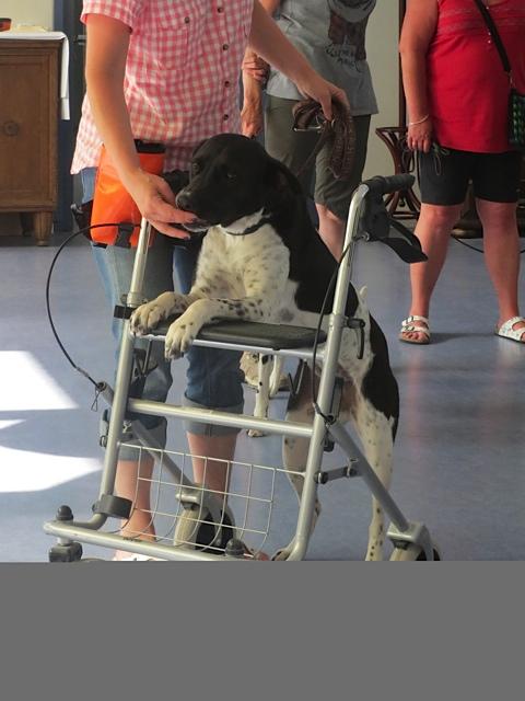Therapiehunde in der Ausbildung bei Stephanie Lang von Langen im Wunjo-Projekt, flipper-privat.de