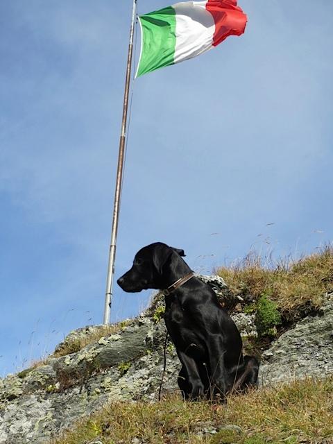 Labrador am Gipfel, Hund Miss Lomax unter italienischer Flagge, flipper-privat.de