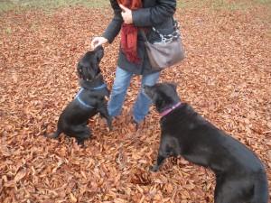 Hunde lieben Leckerlis, Miss Lomax und Blacky im Laub, flipper-privat.de
