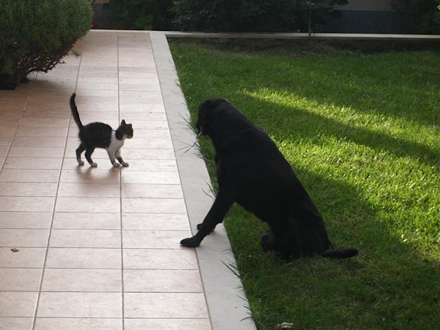 Hund und Katz, Luna versteht sich gut mit Katzen, flipper-privat.de