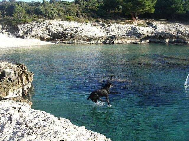 Labrador springt ins Meer, Luna ist der beste Hund der Welt,  flipper-privat.de