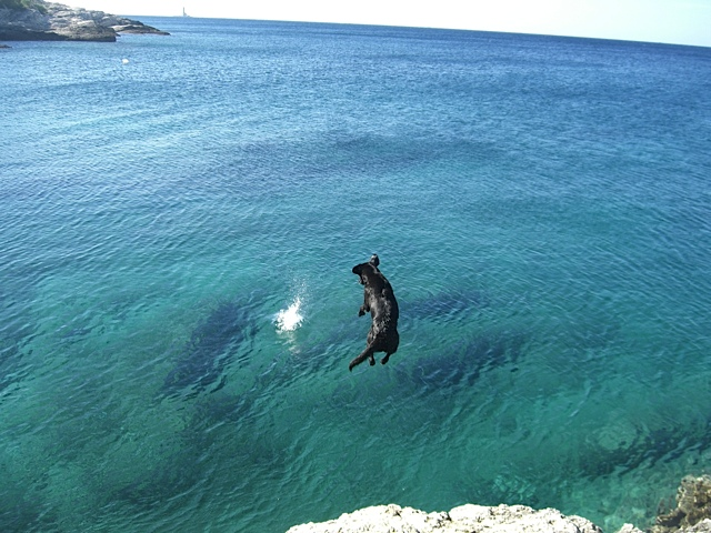 Labrador springt ins Meer, Luna ist der mutigste Hund der Welt, flipper-privat.de