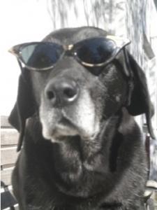 Hund  Luna mit Sonnenbrille, flipper-privat.de