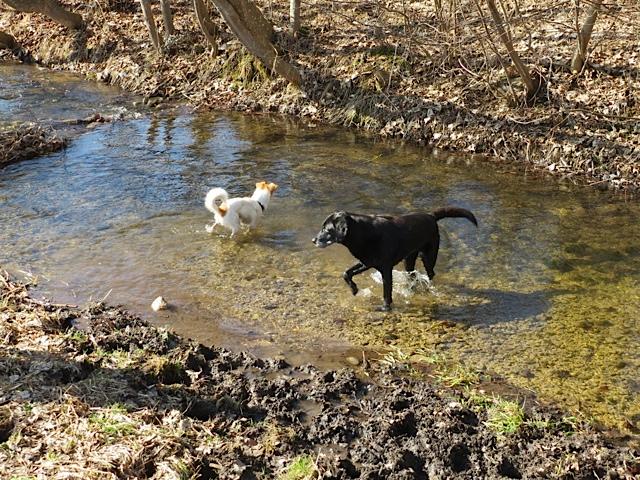 Zwei Hunde im Bach, Luna und ihre Hundefreundin, flipper-privat.de