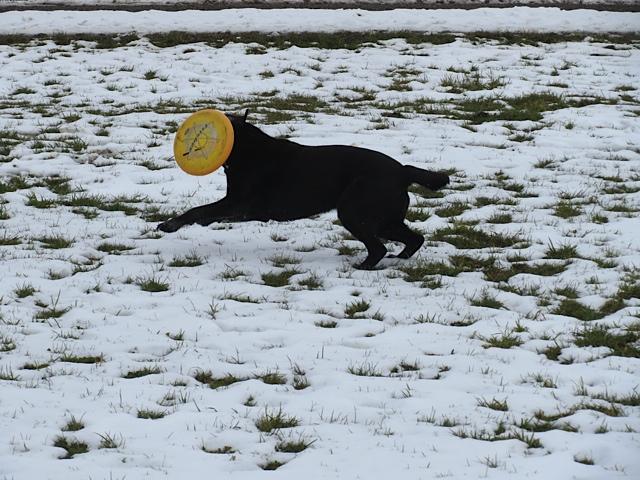 Hund und Frisbee, Luna fängt die Frisbee, flipper-privat.de