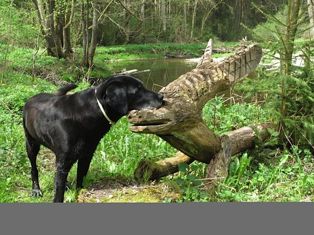 Mit Luna am Fluss, Hund und Holz, flipper-privat.de