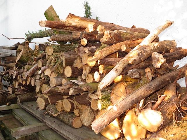 Arbeitshund sammelt fleißig Holz, Lunas Haufen, flipper-privat.de