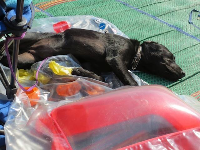 Hund schläft, nachdem Miss Lomax etwas kaputt gemacht hat, flipper-privat.de