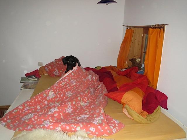 Hund im Menschenbett, Labrador Miss Lomax ist müde, flipper-privat.de