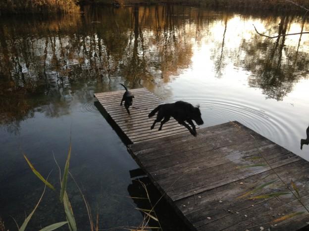 Schwarze Hunde jagen sich, Miss Lomax verfolgt ihren Hundefreund Paul, flipper-privat.de