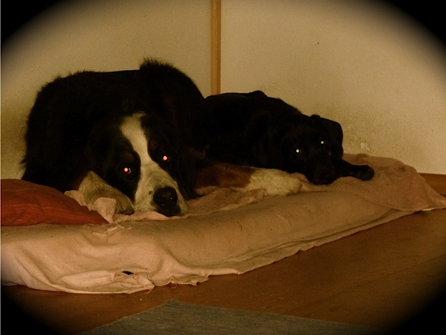Zwei Hunde, die sich  mögen, Hundefreundschaft zwischen Luna und Moll, Hunde im Körbchen, flipper-privat.de