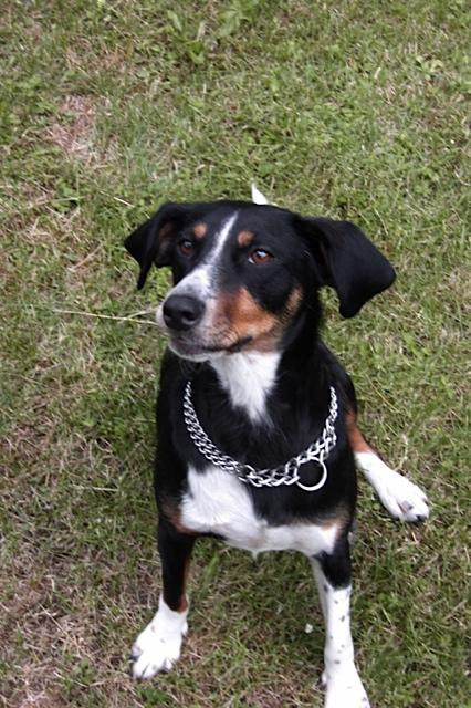 Hund aus Griechenland, Hundefreundin von Luna, flipper-privat.de