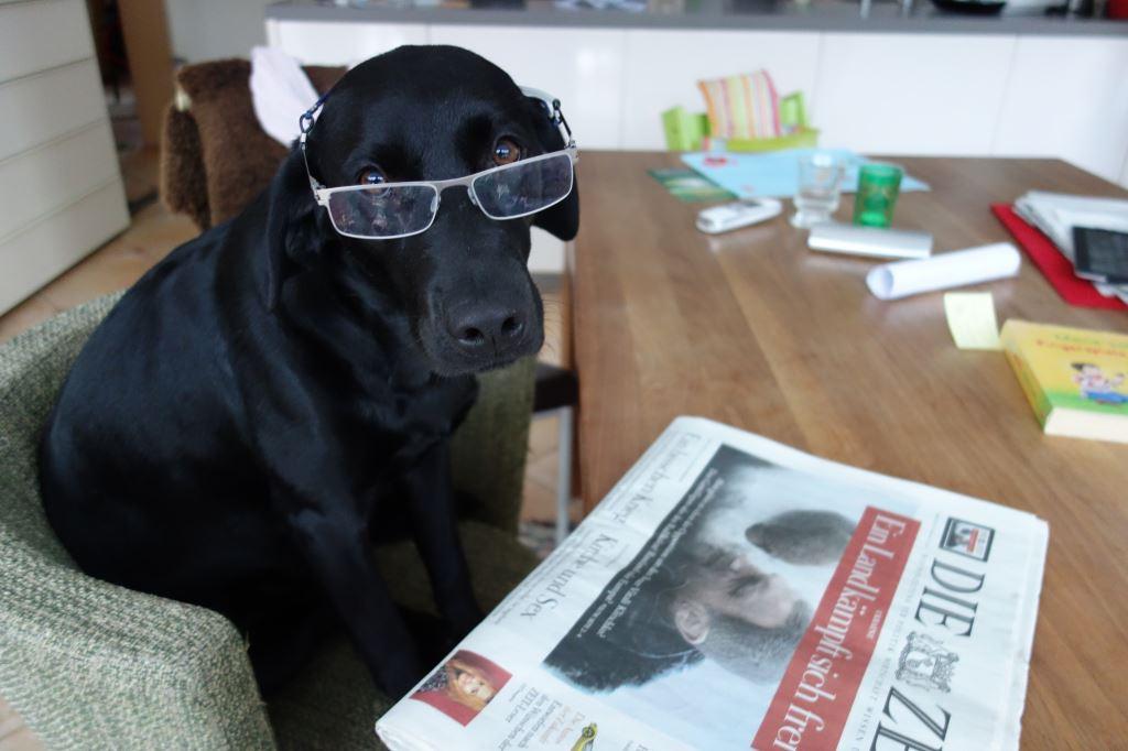 Wenn Hunde Zeitung lesen, brauchen sie schon mal eine Brille wie Labrador Miss Lomax der Autorin Michaela Seul, flipper-privat.de