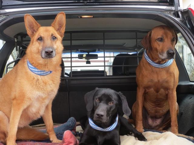 Hunde mit bayerischem Halsband, weiß-blaue Hunde, Miss Lomax und ihre Kumpels, flipper-privat.de