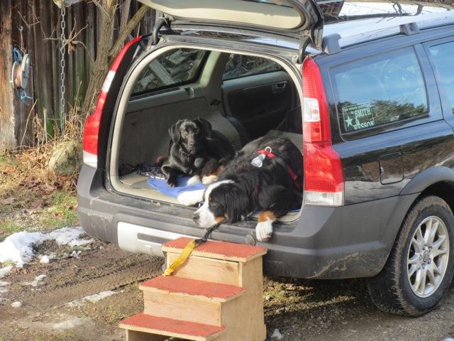 Hunde im Kofferraum, Labrador Miss Lomax und ihr Kumpel Moll, flipper-privat.de