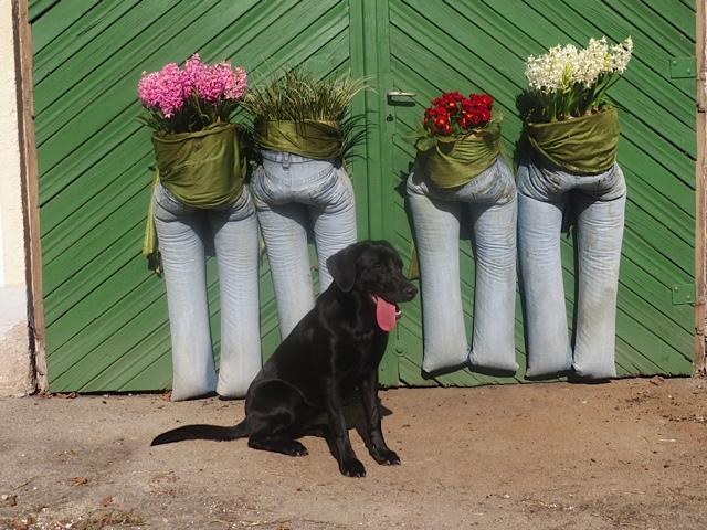 Hund beißt in knackigen Po, Jeans mit Blumen, Zunge hängt raus, flipper-privat