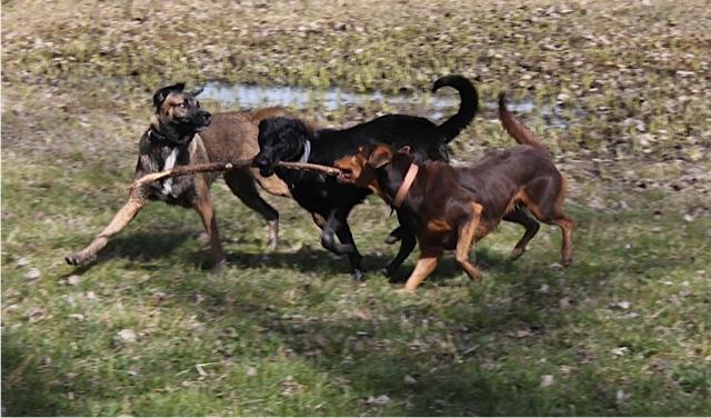 ML im Spiel mit 2 Hunden