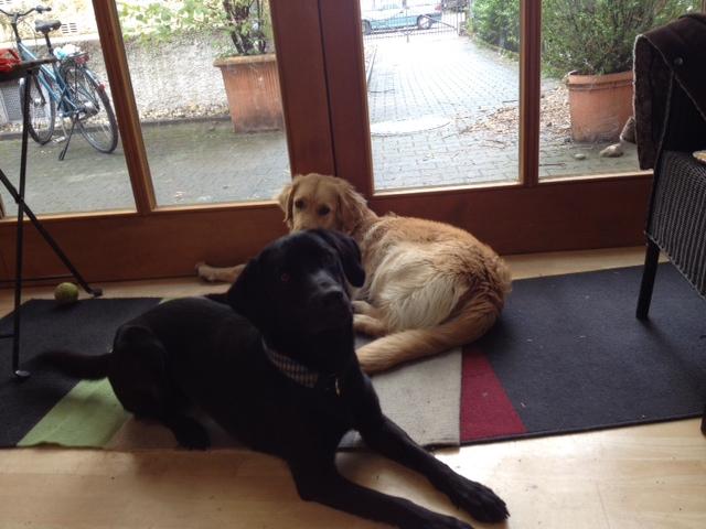 Miss Lomax und Emma sind zwei Bürohunde, die sich langweilen, weil ihr Frauchen Shirley Michaela Seul mit Christine Proske spricht, auch über den Hundeblog der Schriftstellerin, den es unter www.flipper-privat.de zu lesen gibt