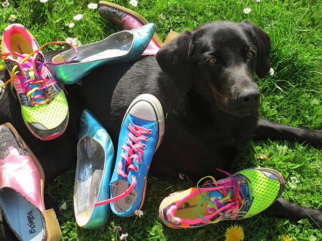 Hier zeigt der schwarze Labrador Miss Lomax , wie viele bunte Schuhe sein Frauchen, die Autorin Shirley Michaela Seul, die auch einen Hundeblog führt unter www.flipper-privat.de hat
