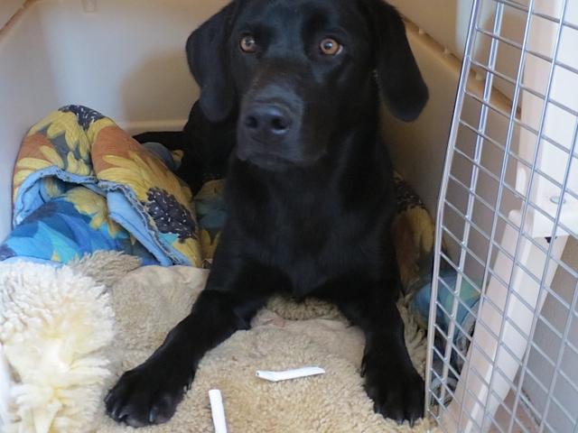 Der schwarze Labrador Miss Lomax der Schriftstellerin Shirley Michaela Seul, die auch einen Hundeblog führt unter www.flipper-privat.de hat zwei selbstgedrehte Zigaretten geklaut