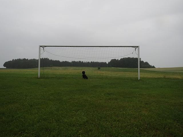 Miss Lomax sitzt im Fußballtor und wird jeden Ball halten, denn sie ist die Muse der Schriftstellerin Shirley Michaela Seul, die unter www.flipper-privat einen beliebten Hundeblog führt, und das auch zur WM