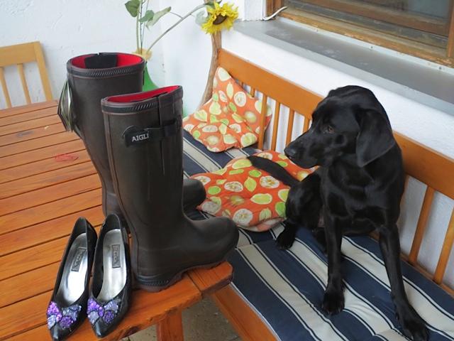 Skeptisch betrachtet Miss Lomax, der Labrador, die neuen Aigle Stiefel Vario ihres Frauchens, der Schriftstellerin Shirley Michaela Seul, deren Muse sie ist, und als solche führt sie auch einen Hundeblog unter www.flipper-privat.de
