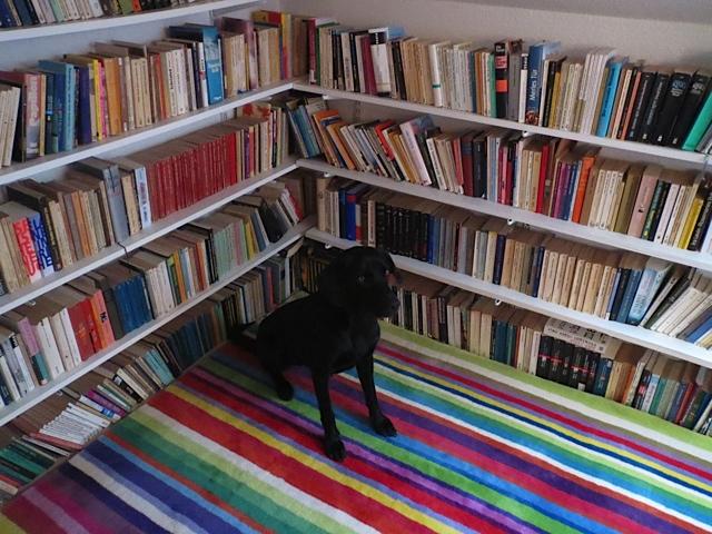 Vor einem Bücherregal auf einem bunten Teppich sitzt hier Miss Lomax, Bloggerin unter www.flipper-privat.de, die auch als Muse der Schriftstellerin Shirley Michaela Seul viel lesen muss, was ja für einen schwarzen Labrador ungewöhnlich ist