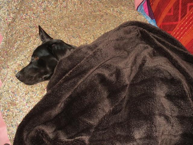 Auch wenn Miss Lomax, der schwarze Labrador der Schriftstellerin Michaela Seul als deren Muse sie tätig ist, schläft, arbeitet sie an Büchern wie der Hundekrimiserie Flipper oder an ihrem Hundeblog www.flipper-privat.de