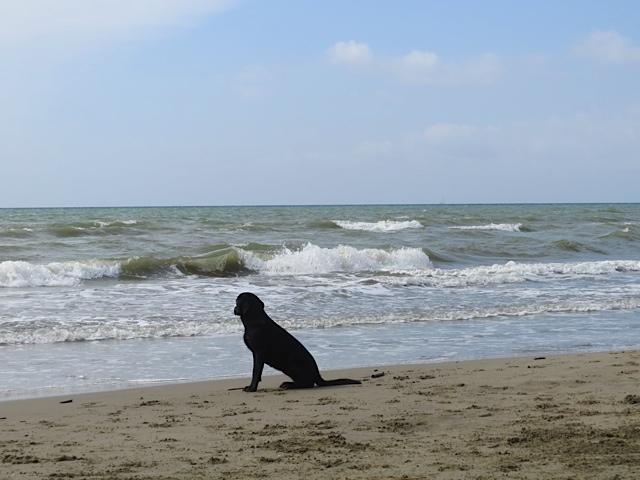 Sehnsüchtig wartet der Hund am Strand auf sein Frauchen, es ist ist die Muse der Schriftstellerin Shirley Michaela Seul, die ihren Hundeblog www.flipper-privat.de verloren hat