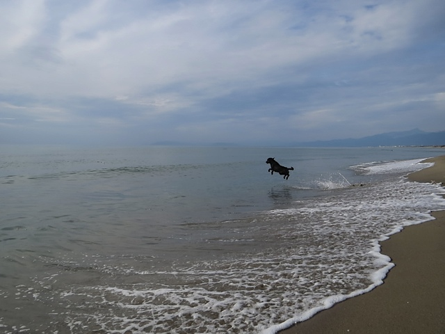 Todesmutig stürzt sich der Hund der Autorin Michaela Seul in die Fluten des Mittelmeeres und taucht dort nach neuem Stoff für seinen Blog www.flipper-privat.de