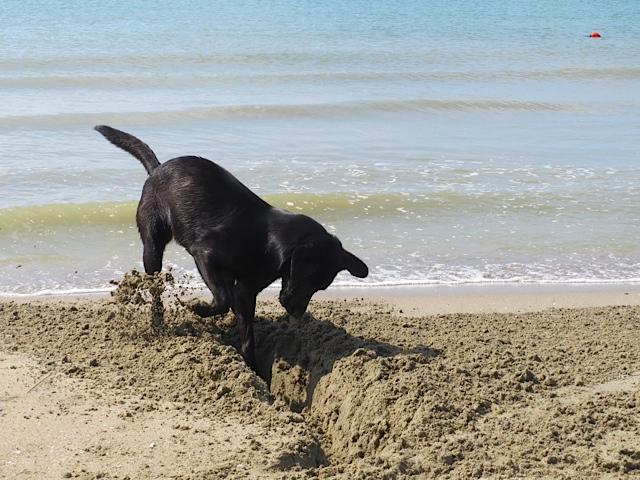 Sie ist nicht nur Muse der Schriftstellerin Shirley Michaela Seul, Miss Lomax arbeitet auch am Kanal, wenn sie nicht gerade an ihrem Hundeblog schreibt, den man unter www.flipper-privat.de lesen kann