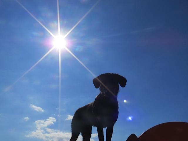 Ein Stern geht auf am Hundehimmel, es ist Miss Lomax, der schwarze Vierbeiner von Shirley Michaela Seul, die mit dem Hund zusammen einen Hundeblog verfasst unter www.flipper-privat.de