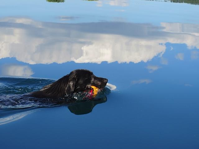 Miss Lomax, der schwarze Labrador der Schriftstellerin Shirley Michaela Seul liebt es, zu schwimmen, sogar im Himmel, wo er sich neue Geschichten für seinen Hundeblog www.flipper-privat.de ausdenkt, die er später seinem Frauchen erzählt