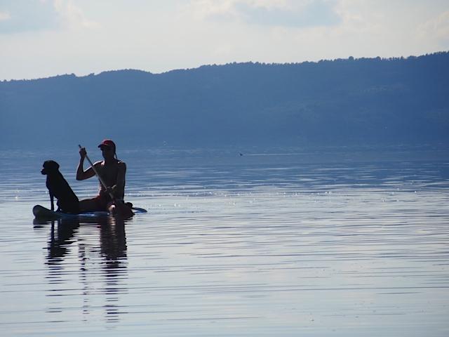 Miss Lomax lässt sich von dem Freund ihrer Chefin, der Autorin Michaela Seul, rudern auf einem Surfbrett und denkt derweilen nach, welche Impressionen sie am Bolsena See generiert für ihren Hundeblog www.flipper-privat.de