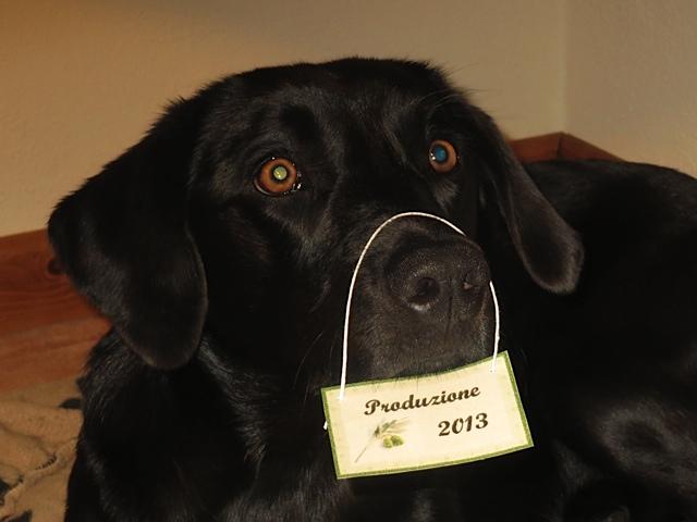 Ob Miss Lomax das wohl lustig findet, auch wenn es stimmt, weil sie 2013 geboren wurde und der Schriftstellerin Shirley Michaela Seul seitdem als Muse zugehört, die auch einen Hundeblog führt unter www.flipper-privat.de