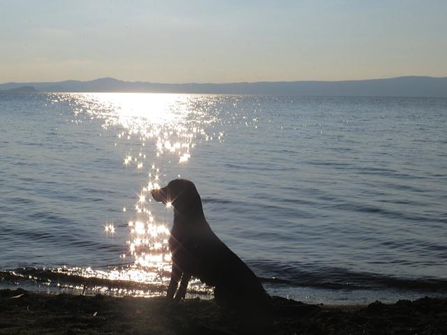 Miss Lomax' Charisma glitzert auf dem Bolsenasee, ob sie gerade eine Idee für einen Blog hat bei www.flipper-privat.de und als Muse der Schriftstellerin Shirley Michaela Seul ihrem Frauchen auch davon erzählt