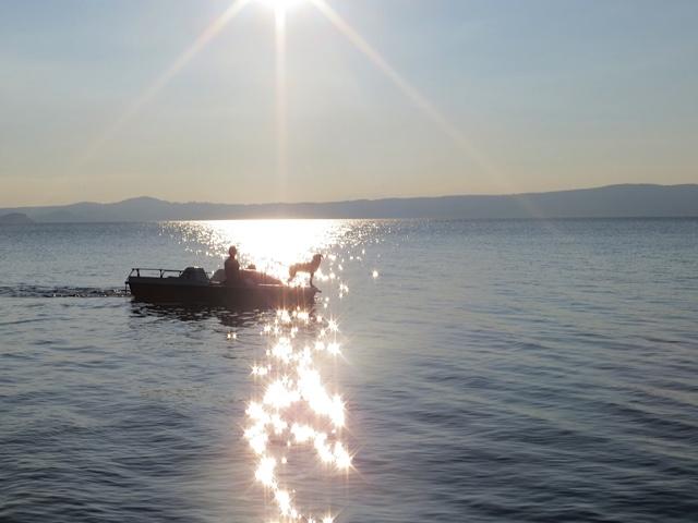 Miss Lomax lässt sich ins Abendlicht hineinrudern auf dem schönen Bolsena See in Italien, wo sie viele Ideen für die Autorin Michaela Seul und den Hundeblog www.flipper-privat.de gesammelt hat