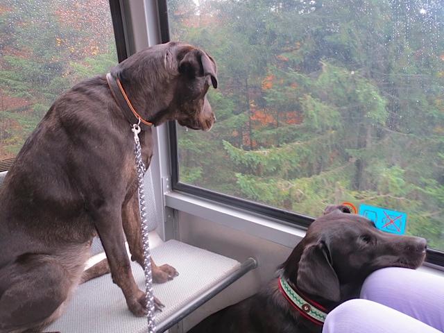 Hunde in Gondel auf dem Weg zum Brauneck, Miss Lomax, die schwarze Muse der Schriftstellerin Shirley Michaela Seul, schläft gleich ein oder sinniert über einen neuen Blogeintrag nach unter www.flipper-privat.de