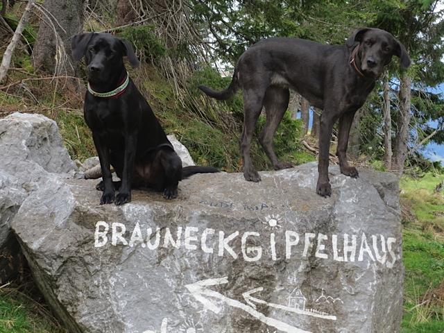 Miss Lomax und ihre Freundin Alma erobern das Brauneck, um dort neue Eindrücke zu sammeln für ihren Hundeblog www.flipper-privat.de, den die Muse einer Schriftstellerin führt