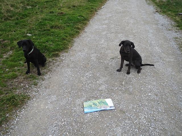 Miss Lomax und ihre Freundin Alma überlegen, wohin der Weg führt, auf dem sie sich mit ihren Frauchen, der Schriftstellerin Shirley Michaela Seul und der Hundepsychologin Stephanie Lang von Lang befinden, erstere führt unter www.flipper-privat.de einen Hundeblog