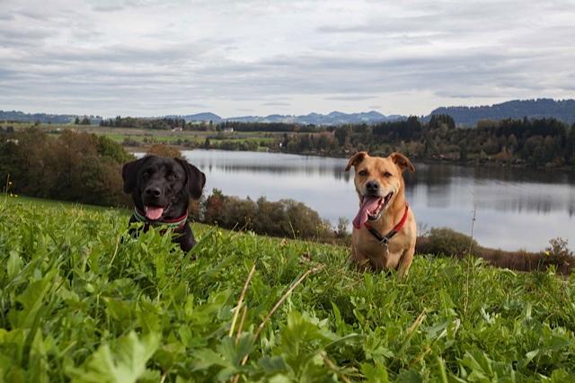 Zwei Blogger treffen sich, Miss Lomax von der Autorin Shirley Michaela Seul und Cabon von Silvana Brangenberg, die beide einen Hundeblog führen unter www.flipper-privat.de