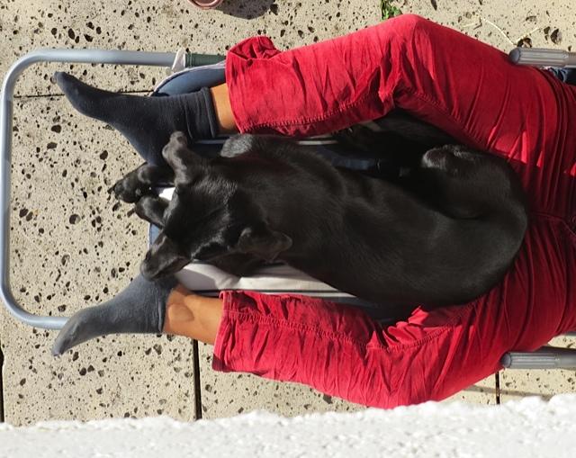Es gibt Beinscheiben und Beinscheren und ich meine, dass man Hundekörbe nicht akzeptieren, sondern kreieren muss, nicht umsonst bin ich die Muse der Schriftstellerin Shirley Michaela Seul, die unter www.flipper-privat.de einen eigenen Blog führt, einen Hundeblog sozusagen