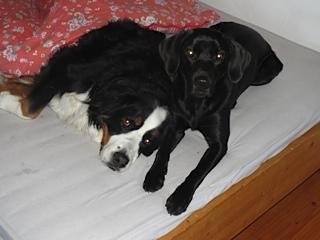 Miss Lomax, der schwarze Labrador, erzählt seinem Freund Moll seinen nächsten Eintrag im Hundeblog unter www.flipper-privat.de, den noch nicht mal Shirley Michaela Seul kennt