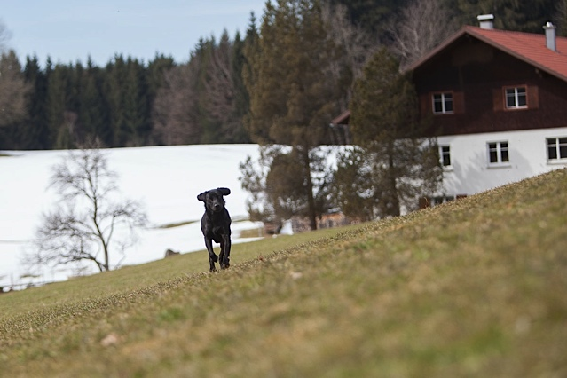 Der Hund der Autorin Shirley Michaela Seul namens Miss Lomax ist auf der Flucht in seinen Blog www.flipper-privat.de