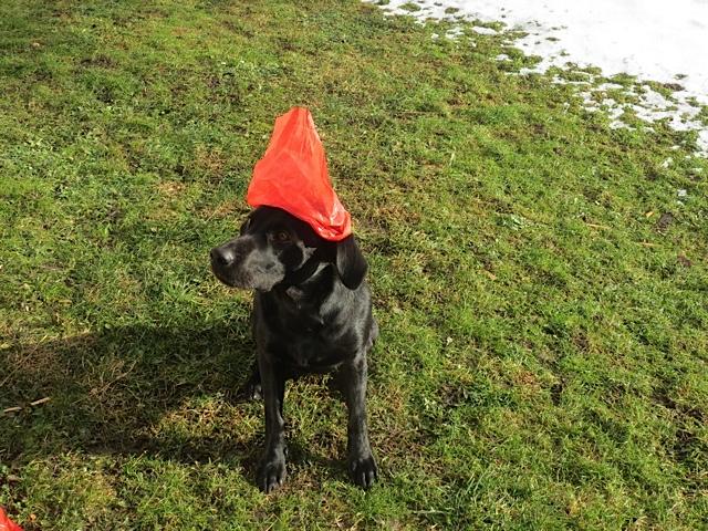 Miss Lomax, Hund der Schriftstellerin Michaela Seul, die einen Hundeblog führt unter www.flipper-privat.de, verkleidet sich als Gartenzwerg