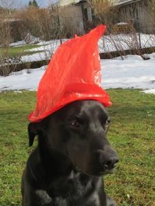Jetzt hat sie mir das Ohr wieder verknickt unter der Trockenhaube bei www.flipper-privat.de