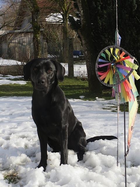 Miss Lomax macht einen Wetterzauber auf ihrem Hundeblog www.flipper-privat.de damit es endlich Frühling wird